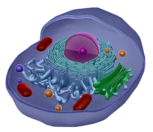 light-therapy-cell-mitochondria