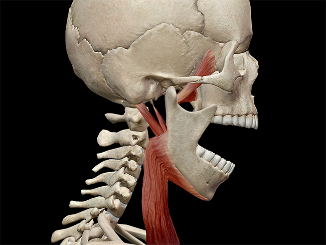 Chew on This: A Look at the Temporomandibular Joint and TMD