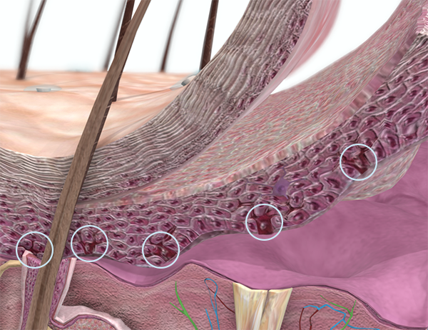 melanocytes-less-melanin-2