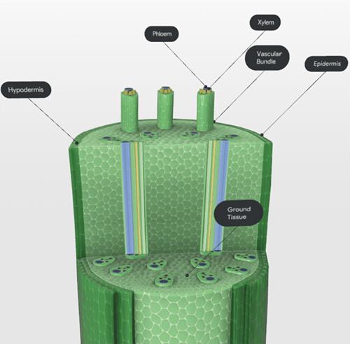 monocot-stem-screenshot-2