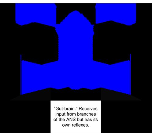 nervous-system-divisions-sympathetic-parasympathetic-enteric