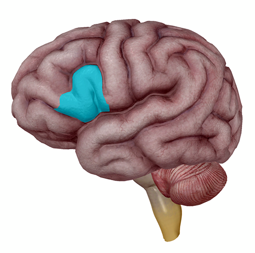 brain-brocas-area-left-ifg
