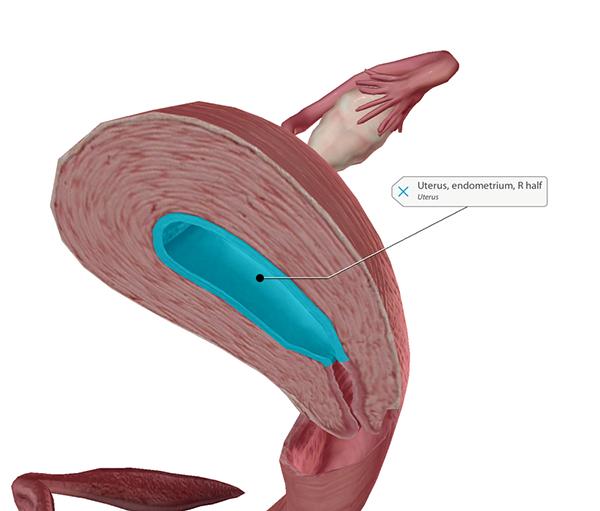 ovary-blog-uterus