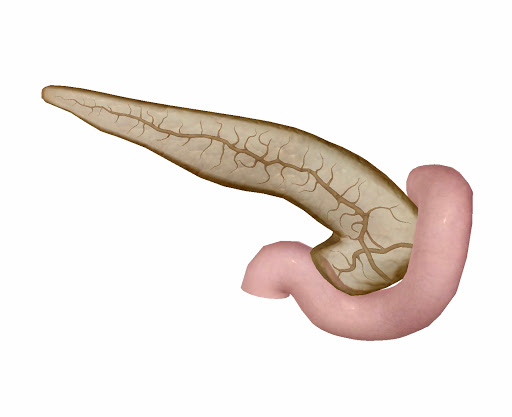 pancreas-and-ducts