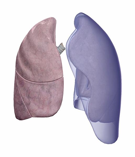 lungs-and-pleurae