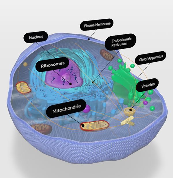 animal-cell-cytoplasm