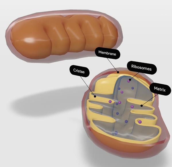 mitochondria-screenshot