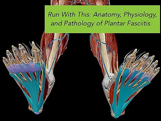 Run With This: Anatomy, Physiology, and Pathology of Plantar Fasciitis