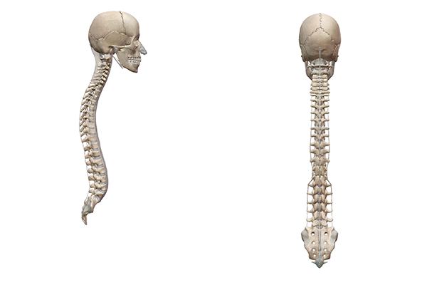 healthy-spine-lateral-anterior-views