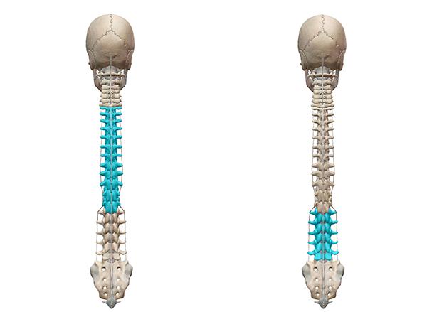 scoliosis-blog-post-spine-regions