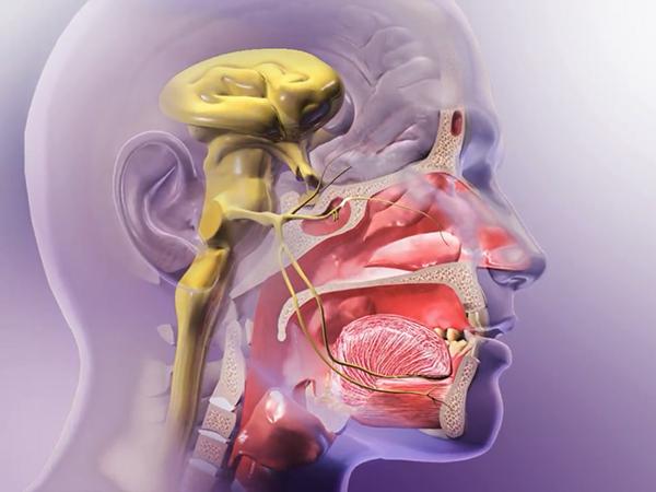 trigeminal-nerve-sneeze