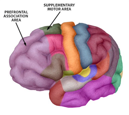 asmr-supplementary-motor-and-prefrontal-assoc