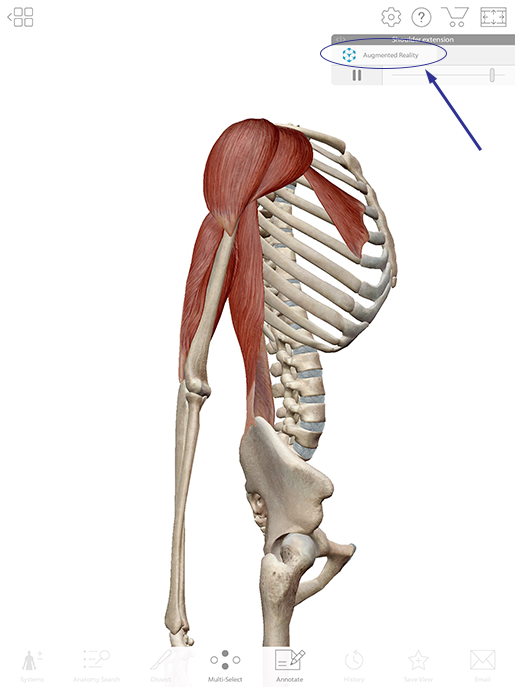 From Anatomy to Pathology: A Shoulder Region Lesson Plan in