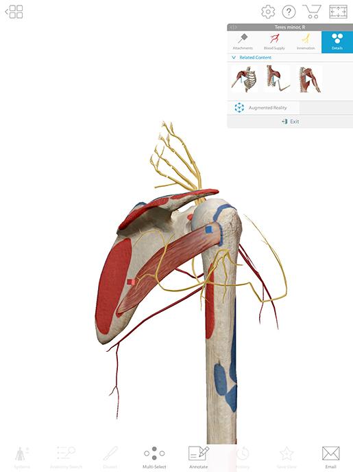 shoulder-lesson-plan-teres-minor-details