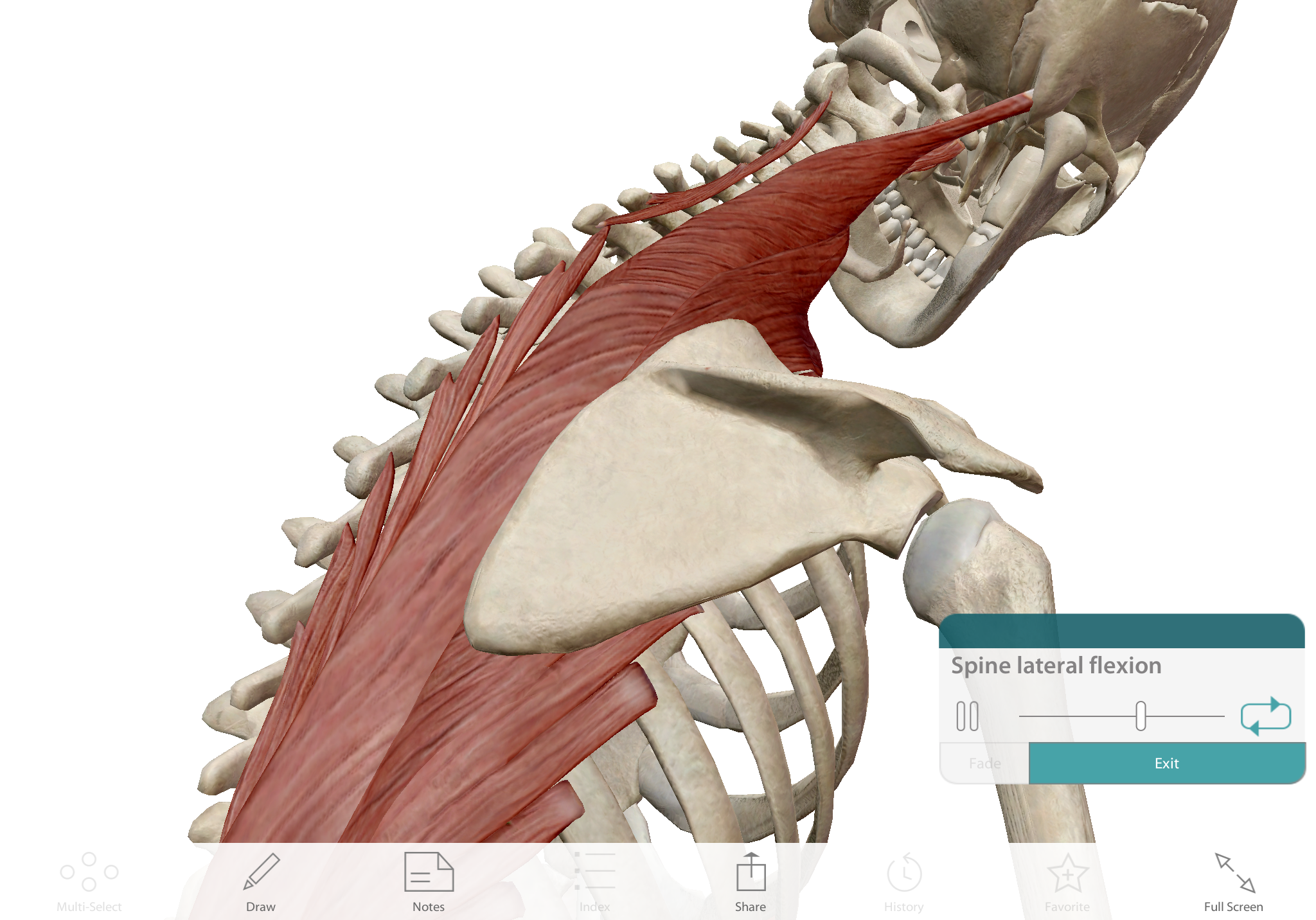 Lateral flexion of the spine