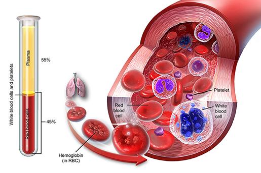 blood-composition