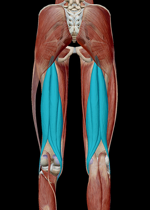 Learn Muscle Anatomy: Common Sports Injuries 101