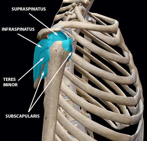 sports-injuries-shoulder-rotator-cuff-muscles