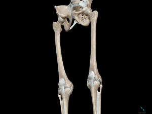 3D Skeletal System: Compact Bone, Spongy Bone, and Osteons—Oh My!
