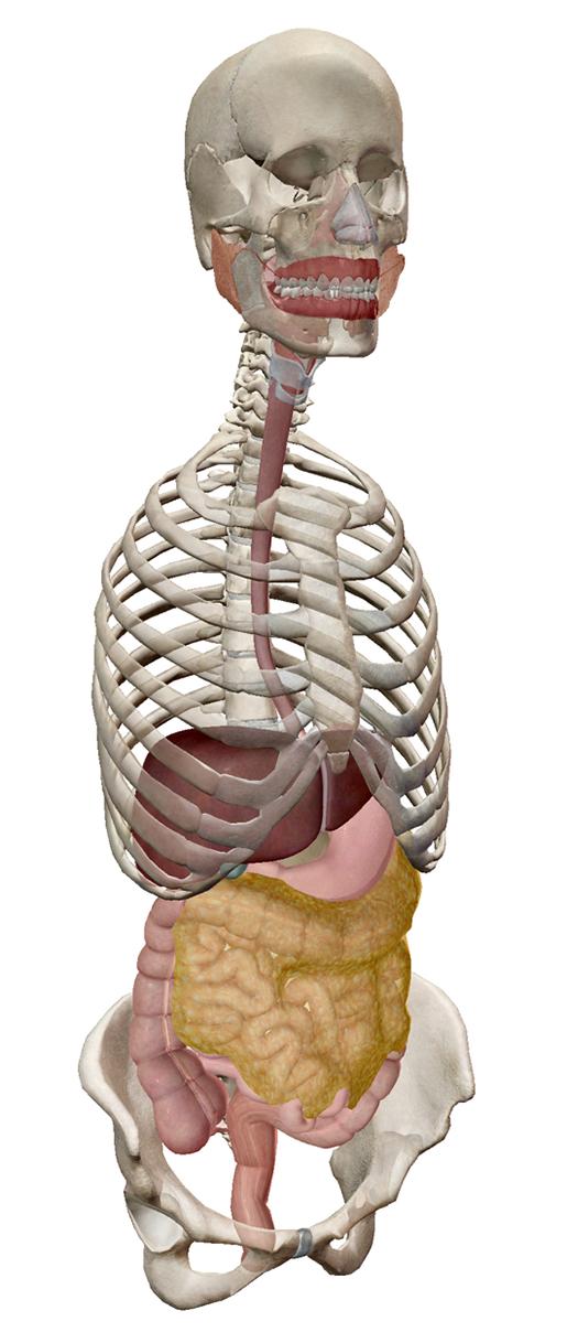 human-digestive-system-1