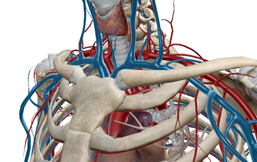 newsdesk-ebola-circulatory-blood-vessels