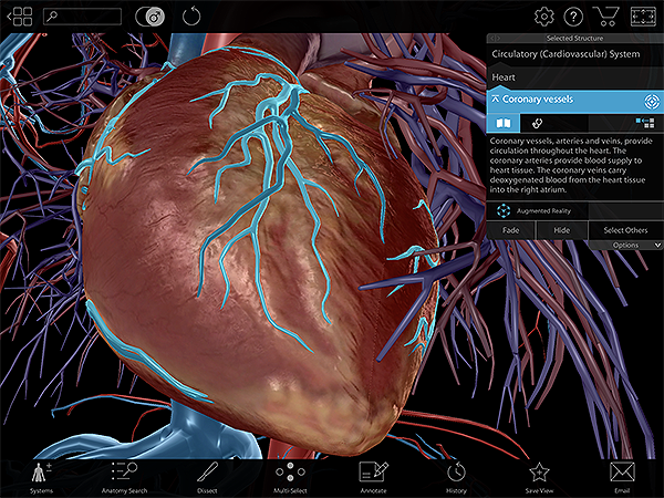 Coronary-Vessels-Heart-Lab-Activity