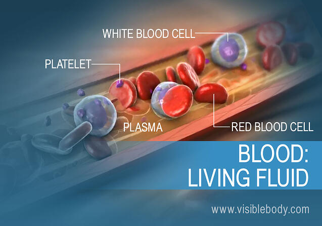 An overview of the different types of blood cells