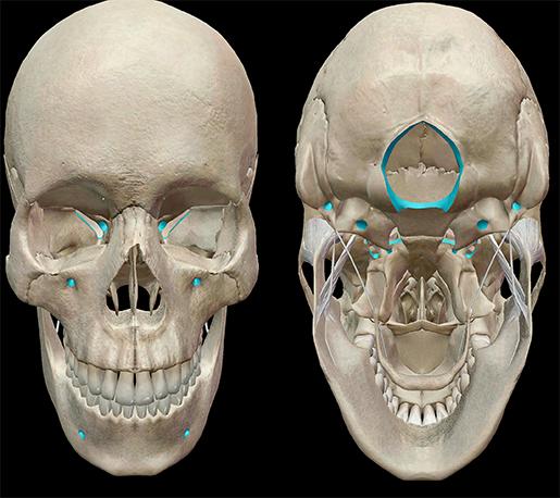 Skull-bones-foramina-foramen-magnum