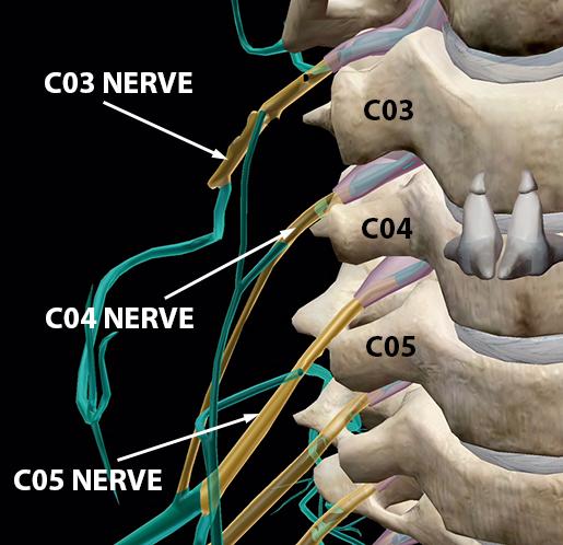 spinal-nerves-foramina-C03-C04-C05-1
