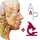 anatomy-and-physiology-new-80