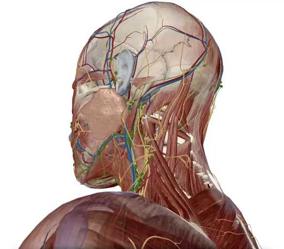 adding-anatomy-cropped_1.jpg