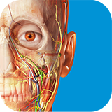 Learn more about the Human Anatomy Atlas App