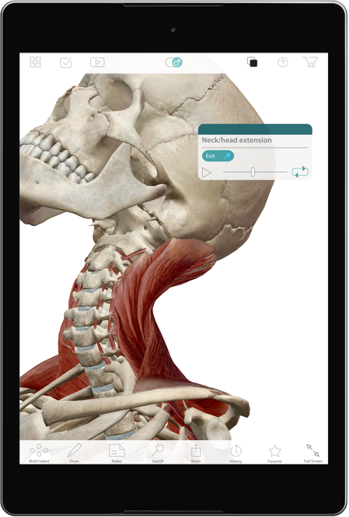 The Muscle Premium app is Ideal for orthopedic specialists, kinesiologists, practitioners of sports medicine, physical therapists, and other professionals and students of muscle and skeletal function.
