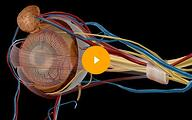 Human Anatomy Atlas Case Study