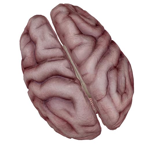 brain4