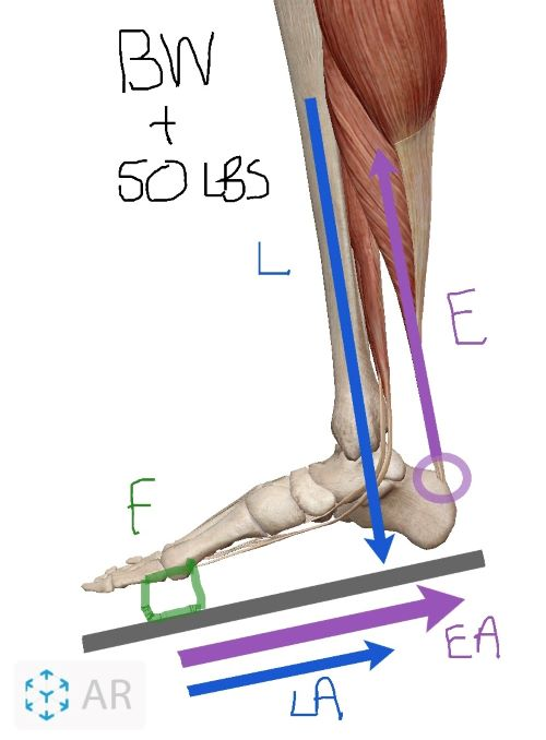 calf-second-class-lever-resized-2