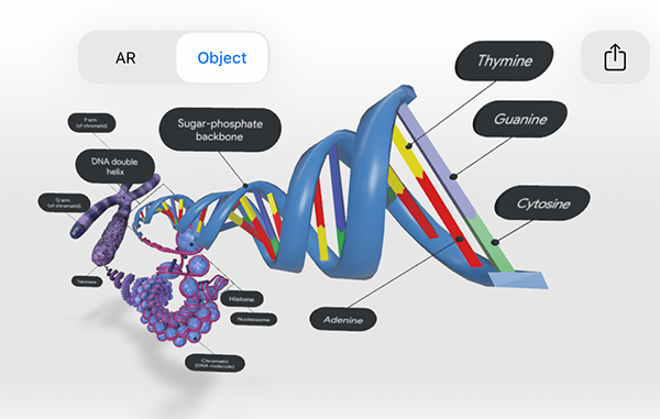 dna-model-screenshot