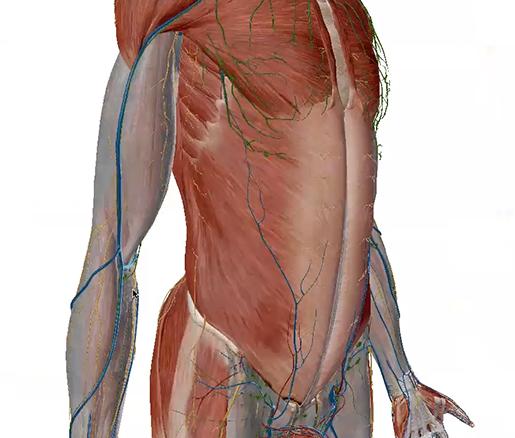 fascia-upper-limb-r-2