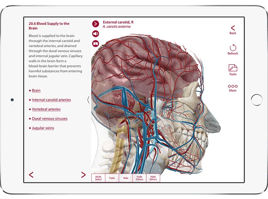 Anatomy and Physiology - Introducción visual a cada sistema del ...