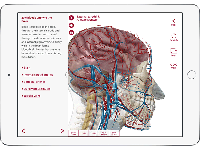Anatomy & Physiology showing anatomy and blood supply of the brain in 3D