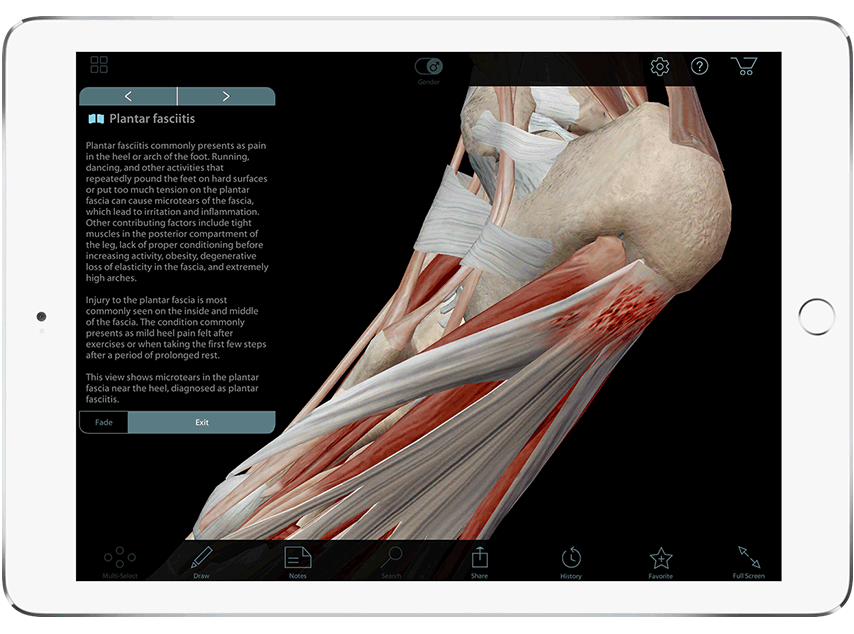 muscle premium - 3d atlas of musculoskeletal anatomy and function, Muscles