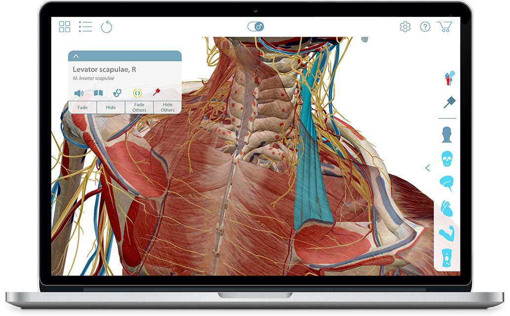 Muscle Premium 3d Atlas Of Musculoskeletal Anatomy And Function