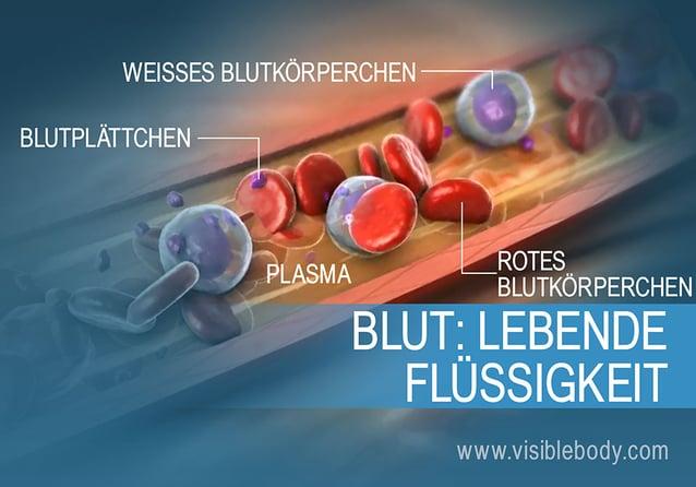 Ein Überblick über die verschiedenen Arten von Blutzellen