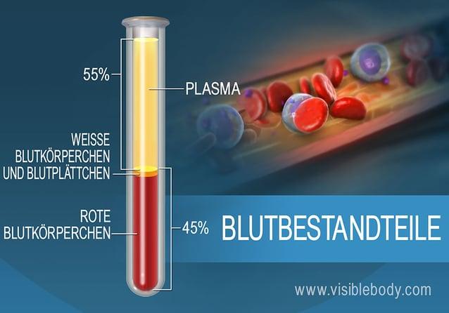 Die prozentuale Zusammensetzung der Blutbestandteile