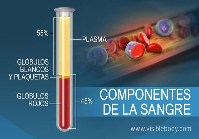 La composición de la sangre por porcentaje