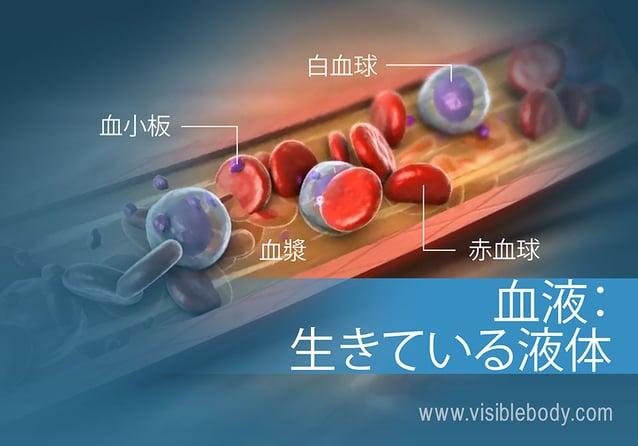 異なる種類の血液細胞の概要