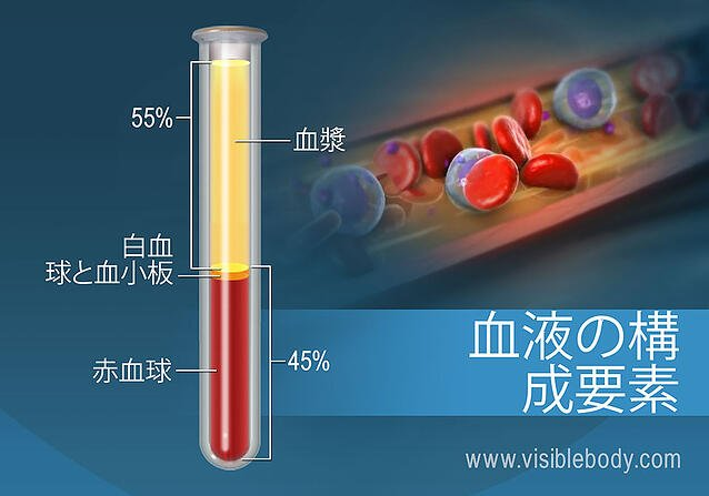 The composition of blood by percentage