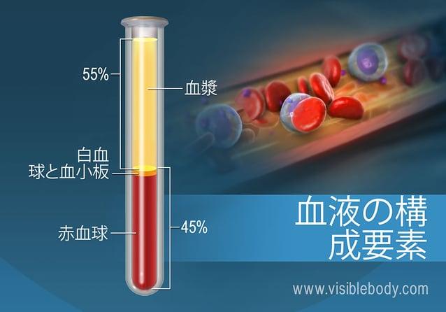 百分率による血液の組成