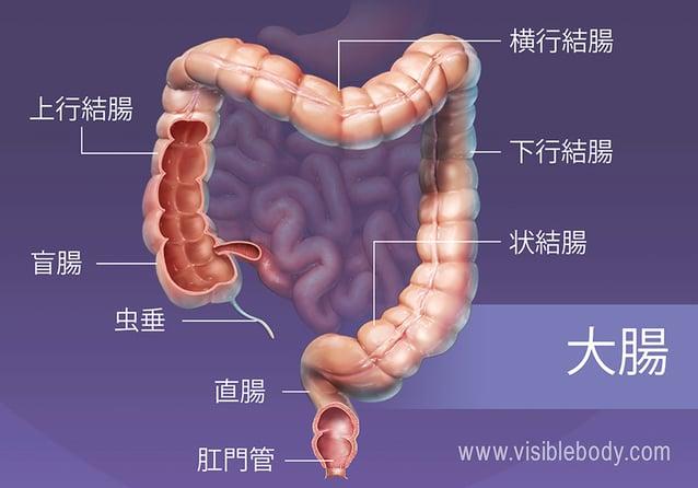 大腸の主な区分