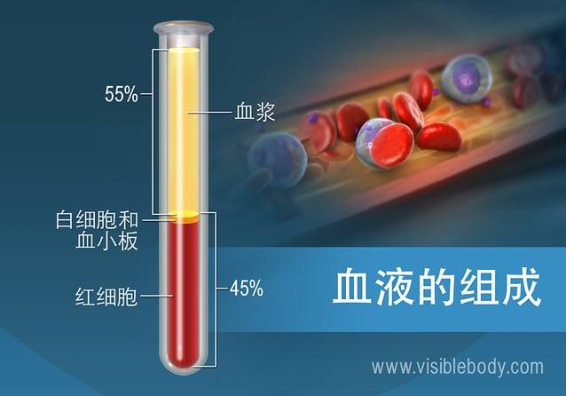 按百分比计算的血液成分